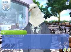 Pigeon Dating Simulator