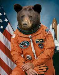 TheBearInSpace