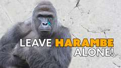 Leave Harambe Alone, Zoo Begs