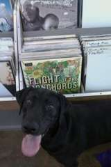 Black Dog Records