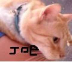 Joe_the_Cat_