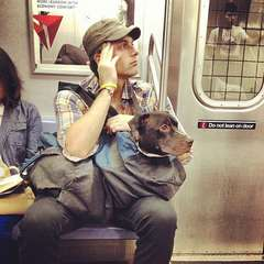 Dogs in Bags on the Subway