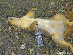 drunk_squirrel