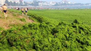 Chinese beachgoers walk by an algae-covered public beach in Qingdao, China, in July. The seas off China have been hit by their l