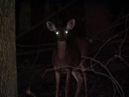 The Deer Is Back | ZeroHedge