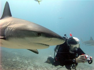 """I might see a shark, let me turn this camera on.."" Shark diving in Abaco. Hope Town Hideaways can make all the arrangements."