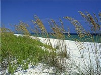 Alabama Gulf Coast Properties  
