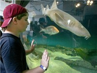 Dauphin Island Sea Lab Estuarium - Tourist Attraction in Dauphin Island