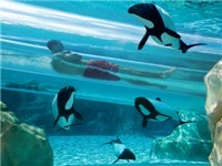 Aquatica - Sea World - Water Park in Orlando