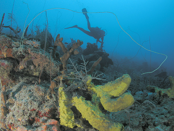 St. Croix has fantastic SCUBA diving