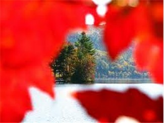 A peek at Lake Dunmore Vermont as seen through the Fall Foliage on a hiking trail.
