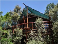 Tree House in Knysna
