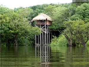 Tree House in Manaus
