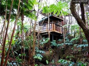 Tree House in Volcano