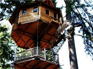 TREE HOUSES Accommodations  