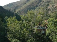 The tree house nestled in the valley