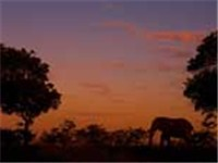 elephant-sunset
