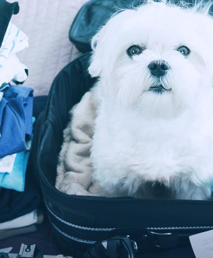 Viajando com animais de estimação