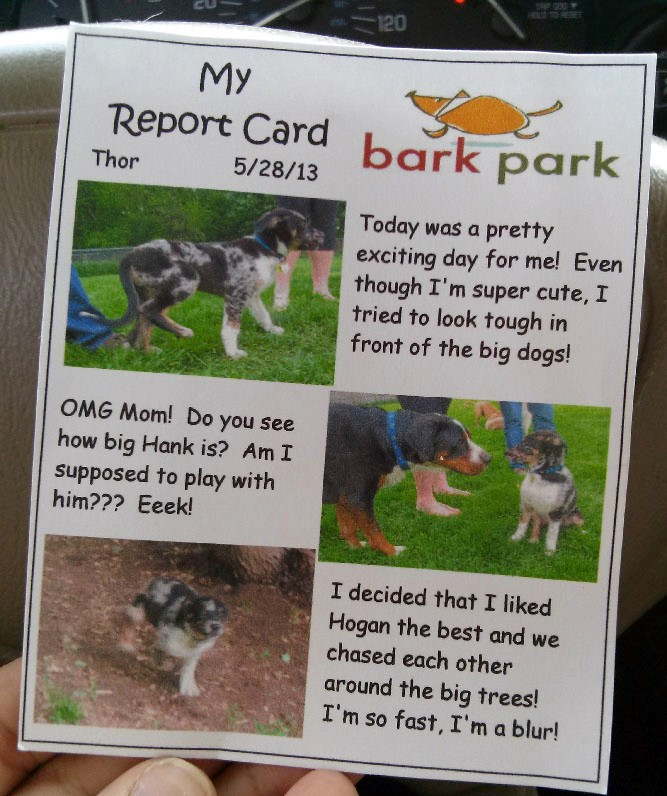 Personalization makes these doggy parents happy