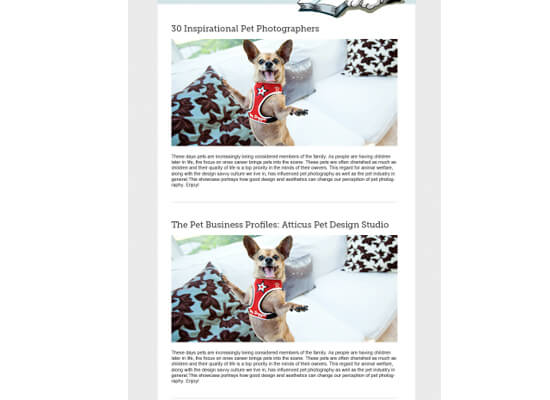 How To Design An Email Newsletter Template In Simple Steps - Daily newsletter template