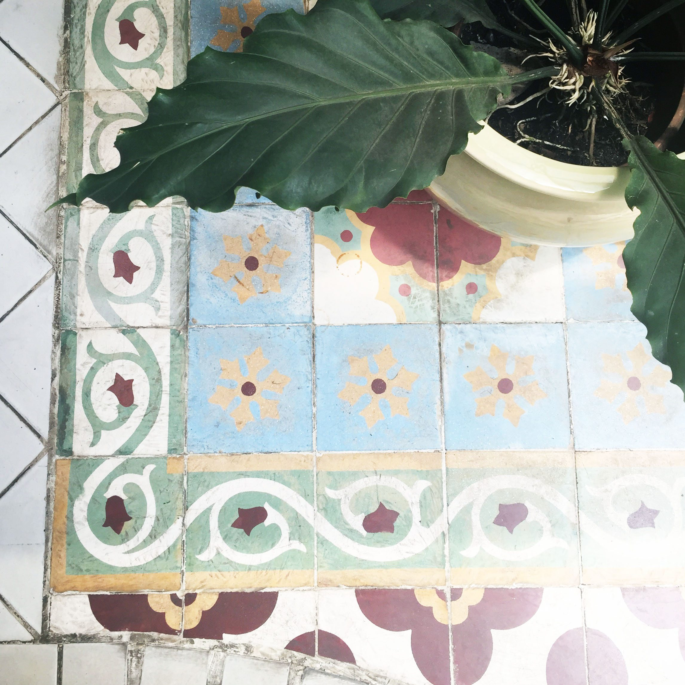 tree and tile - indonesia- edited