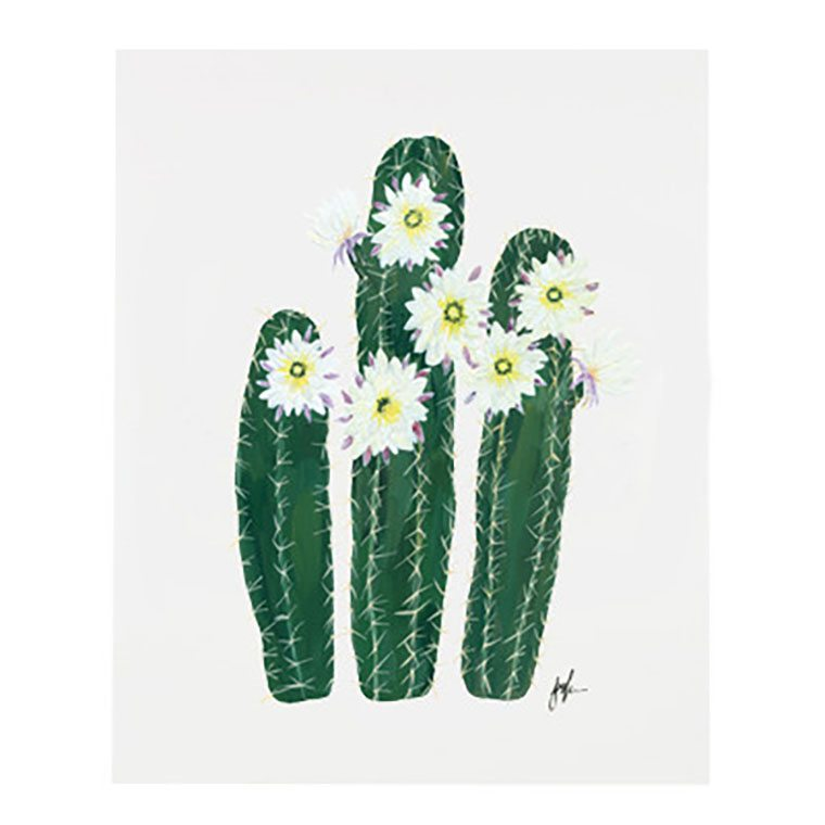 Flowering-Cacti-VI_large. 72