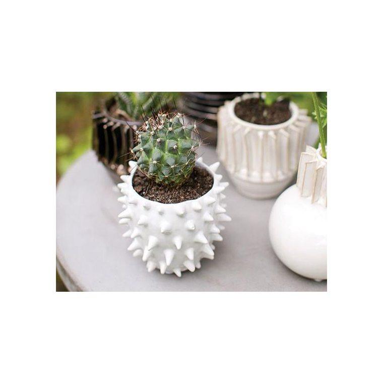 cacti-pot-l-shopceladon