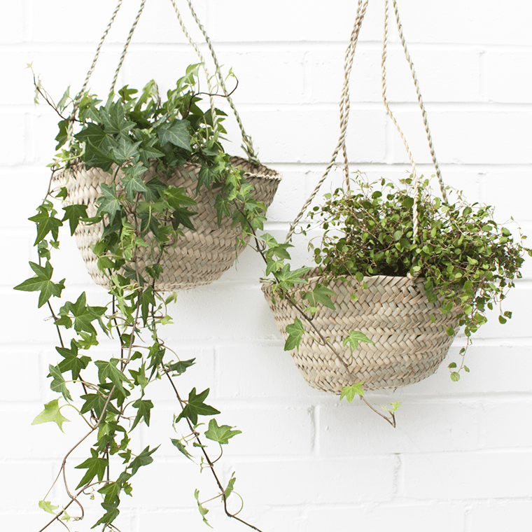 hanging-baskets-3-shopceladon