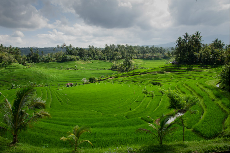 green rice terraces, bali