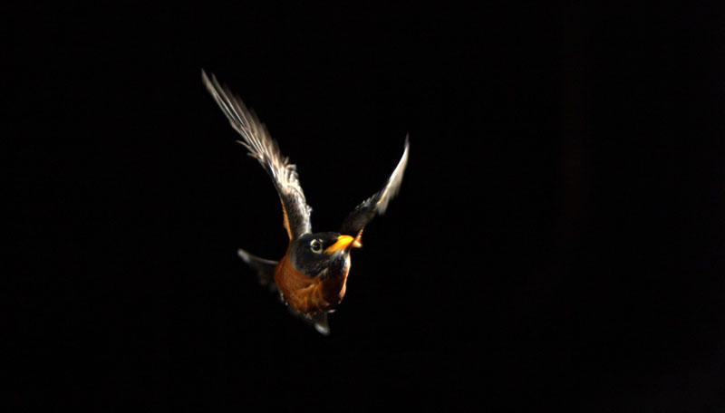 a bird in flight at night