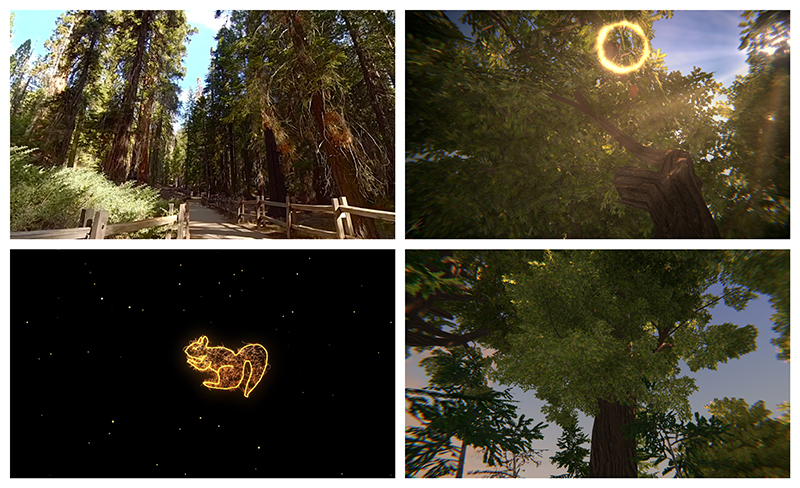 A collage of images from a virtual reality production, including images of sequoia trees
