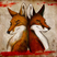 Fox and fox by culpeo fox