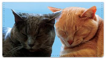 Pet Cat Checkbook Cover