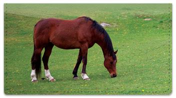 Horse Checkbook Cover