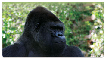 Safari Animal Checkbook Cover