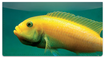 World of Fish Checkbook Cover