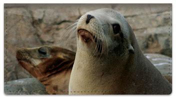 Sea Lion Checkbook Cover