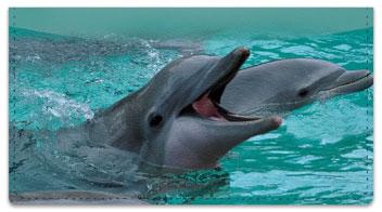 Dolphin Checkbook Cover