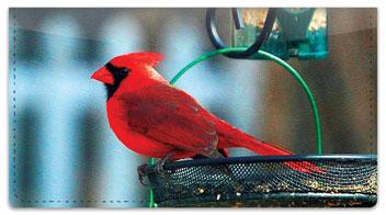 Backyard Bird Checkbook Cover