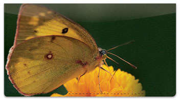 Butterfly Garden Checkbook Cover