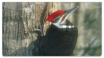 Woodpecker Checkbook Cover