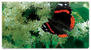Red Admiral Butterfly Checkbook Cover