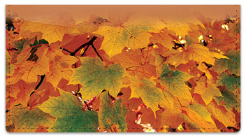 Colors of Fall Checkbook Cover