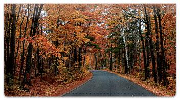 Fall Drive Checkbook Cover