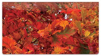 Autumn Brilliance Checkbook Cover