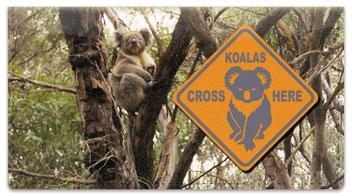 Animals of Australia Checkbook Cover
