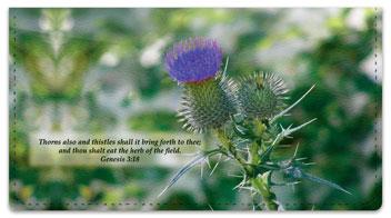 Scripture & Nature Checkbook Cover