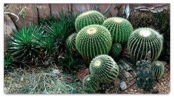 Cactus Garden Checkbook Cover
