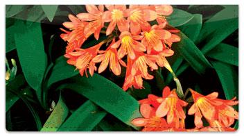Tropical Flower Checkbook Cover