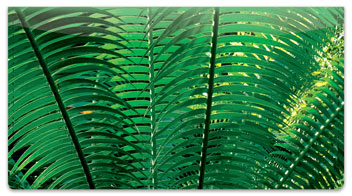 Palm Branch Checkbook Cover